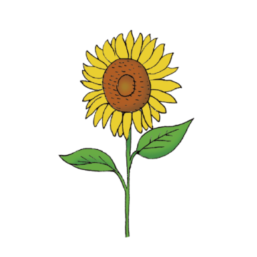 himawari sunflower illustration